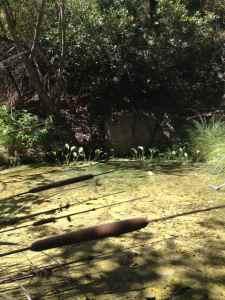 Marshy pools of water in Zuma Creek
