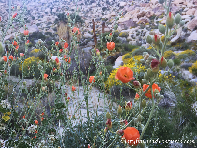 anzaflowers